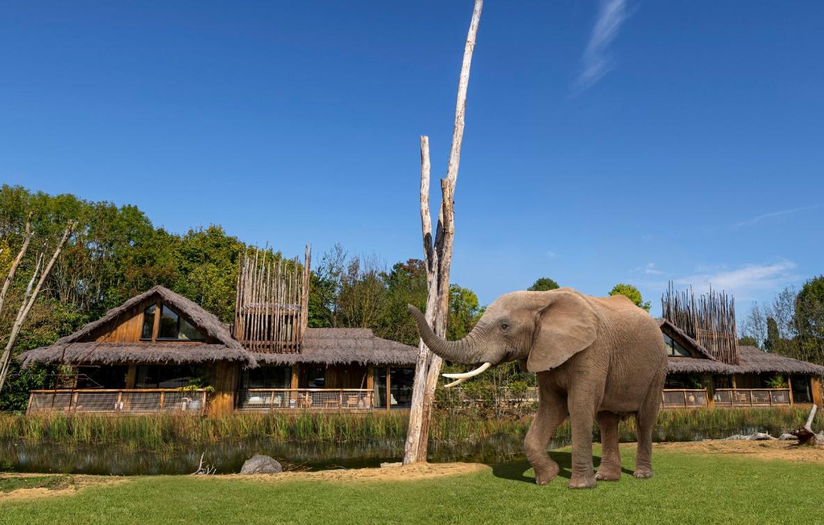 U ovim safari kućicama spavat ćete pokraj slonova i geparda