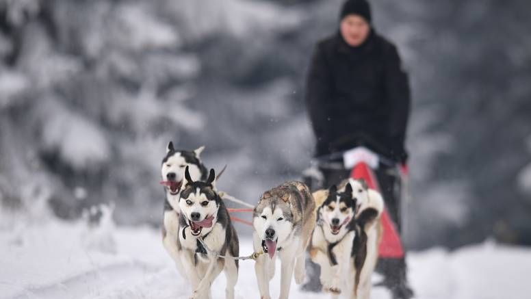 Za ljubitelje zimskih radosti: Psećim sanjkama do skijališta