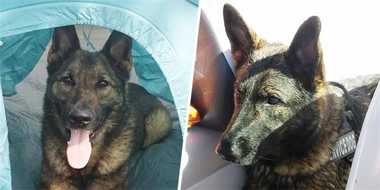 Obitelj u šoku: 'Oprostite, ali poslali smo vam psa u Japan'