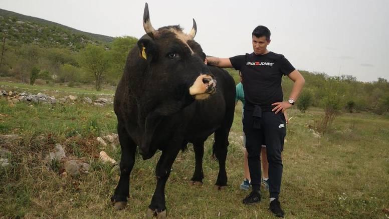 Mrcina iz Dicma: Nitko nije jači i opasniji od našeg bika Covida