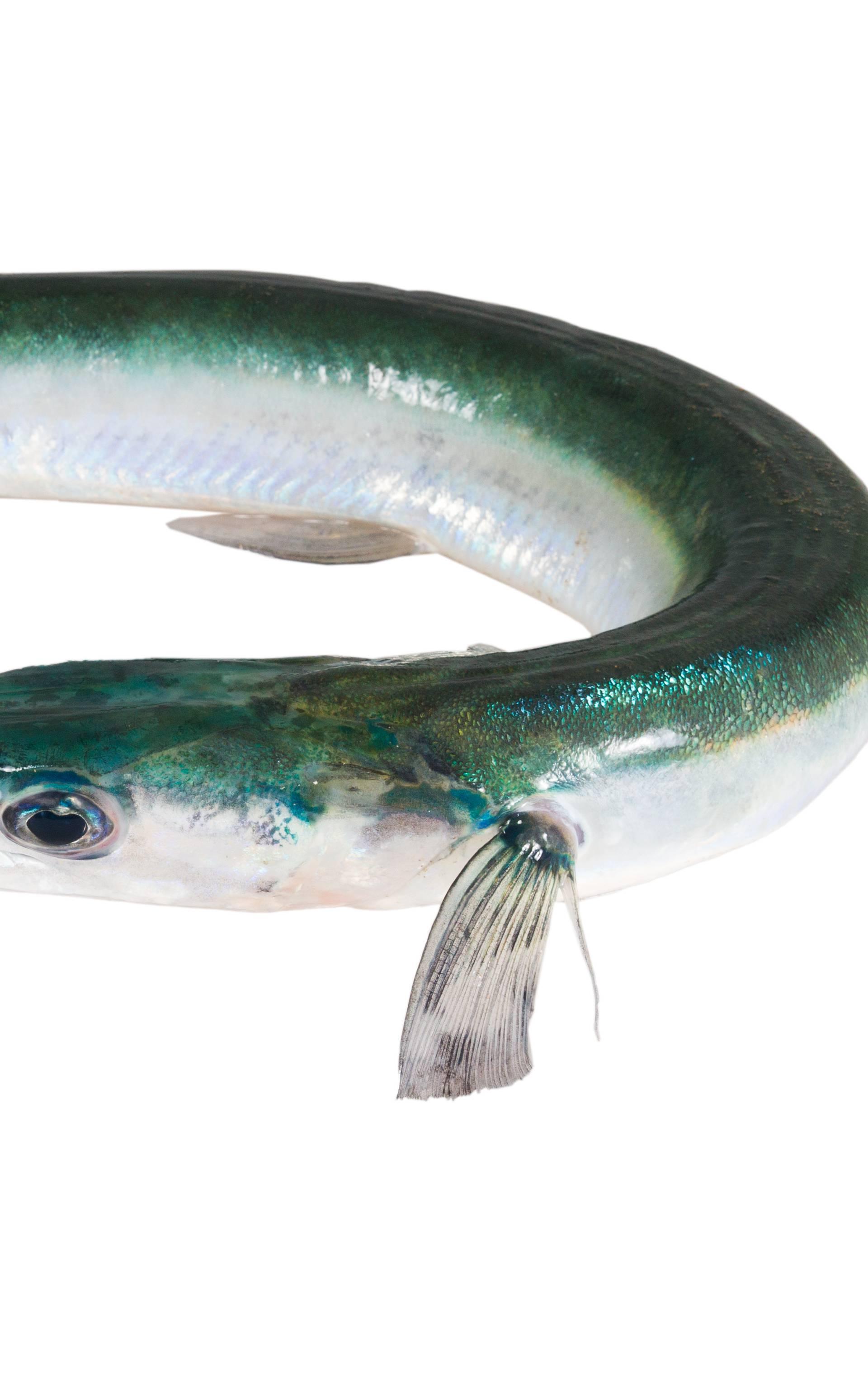 Bizarna ozljeda: Riba kupačicu ubola u oko, čeka operaciju
