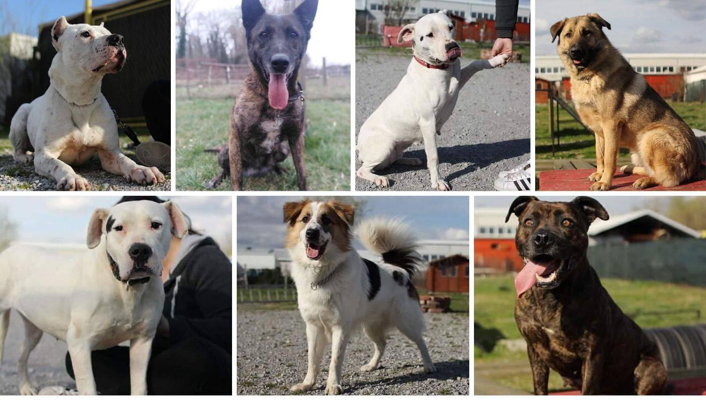 Pomozite pronaći dom ovim psima: 'Njih baš nitko ne želi'