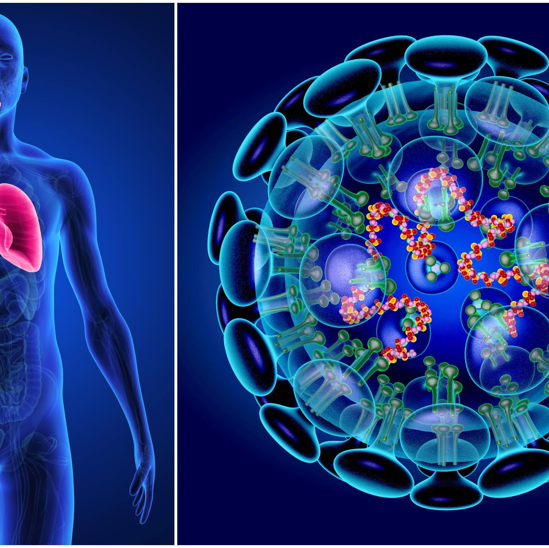 Natječaj: Za istraživanje virusa korone daju 14 milijuna kuna