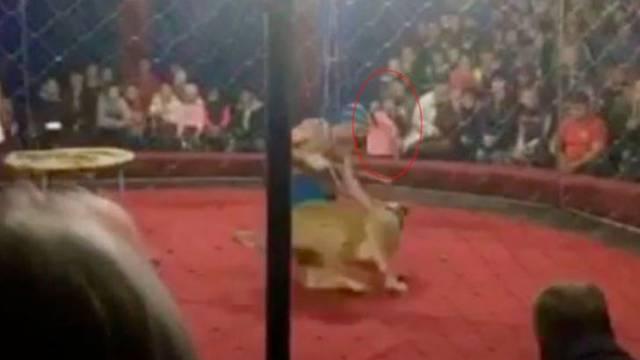Strava u cirkusu: Curicu (4) izgrizla lavica usred nastupa