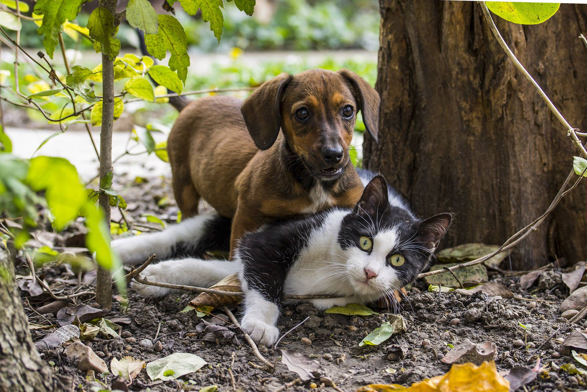 Mačke i psi pamte slično kao i ljudi, sjećaju se ljudi i događaja