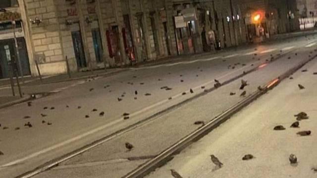 'Masakr čvoraka' u Rimu: Ptice umrle od šoka zbog pirotehnike