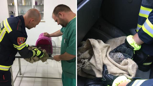 Rovinjski vatrogasci spasili su malog galeba: Ispao iz gnijezda
