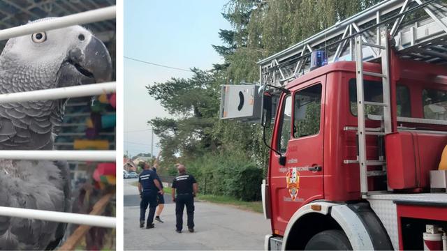 Kiki 'zapeo' na stablu, spasili ga vatrogasci: 'Vlasnica je plakala od sreće kad smo ga spustili'