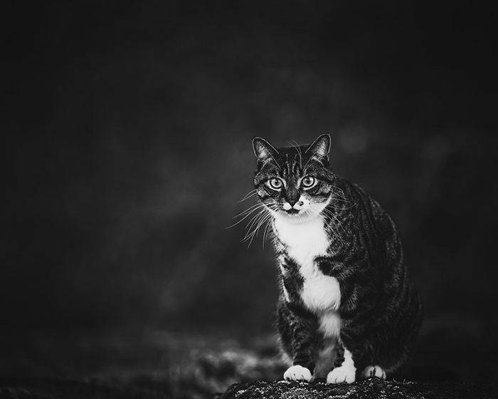 Profesionalne fotografije mačke