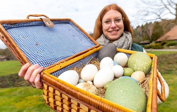 Donja Saska: Jaja stanovnika ptičjeg parka Walsrode su hit