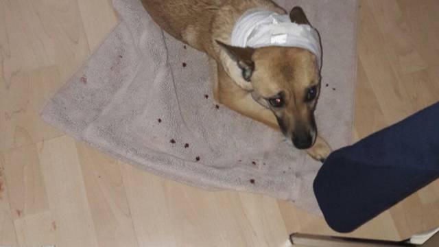 """Dva staforda napala trudnicu i izgrizla psa: """"Bilo je strašno"""""""