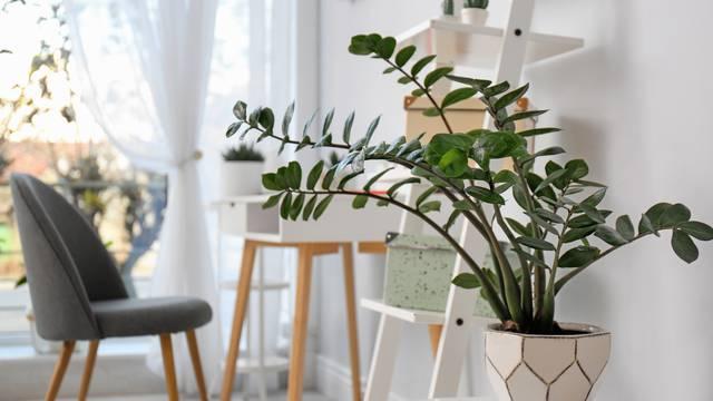 Top 20 ideja gdje i kako držati biljke u domu, da izgleda divno