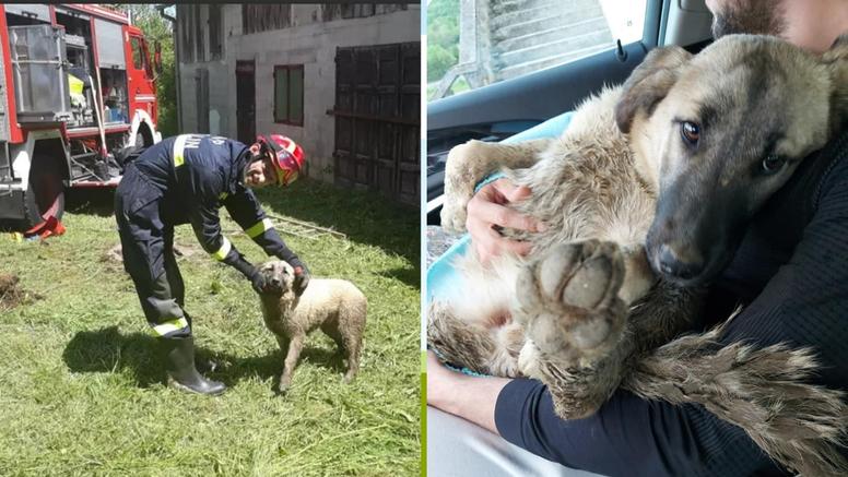 Psa pronašli u septičkoj  jami, spasili  ga vatrogasci: 'Čuli smo cviljenje, lavež i zapomaganje'