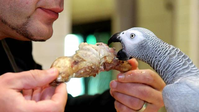 Šibenik: Restoran u kojem papagaj Koko uživa u janjetini s gostima
