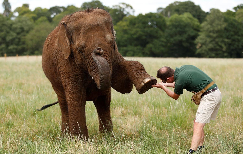 Britanski Safari park ponovno će otvoriti vrata posjetiteljima