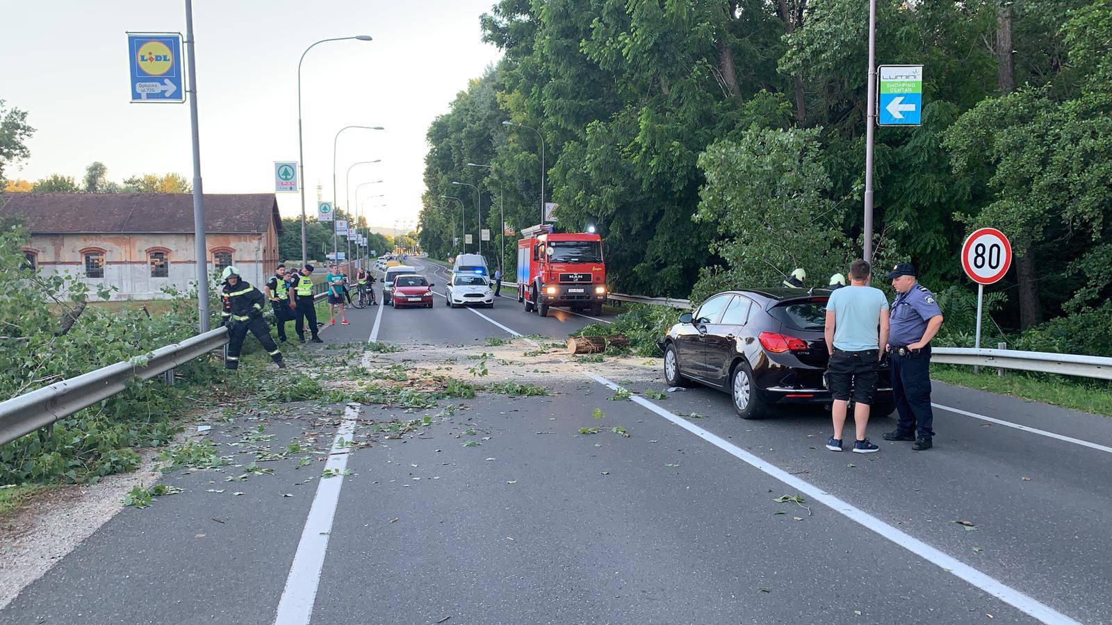 Usred vožnje na dva auta palo  drvo: 'Srećom nema ozlijeđenih'