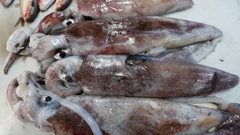 Lignja patagonika  se ipak može konzumirati, proizvod je valjan